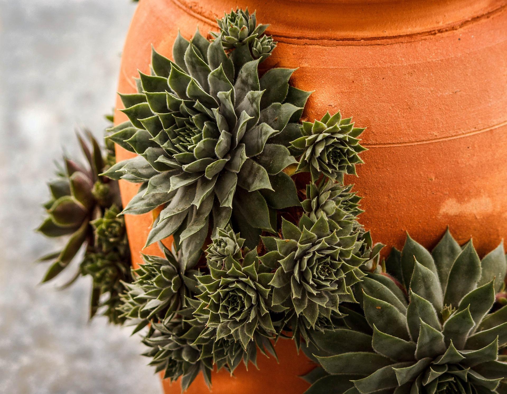 mediterraner Blumentopf