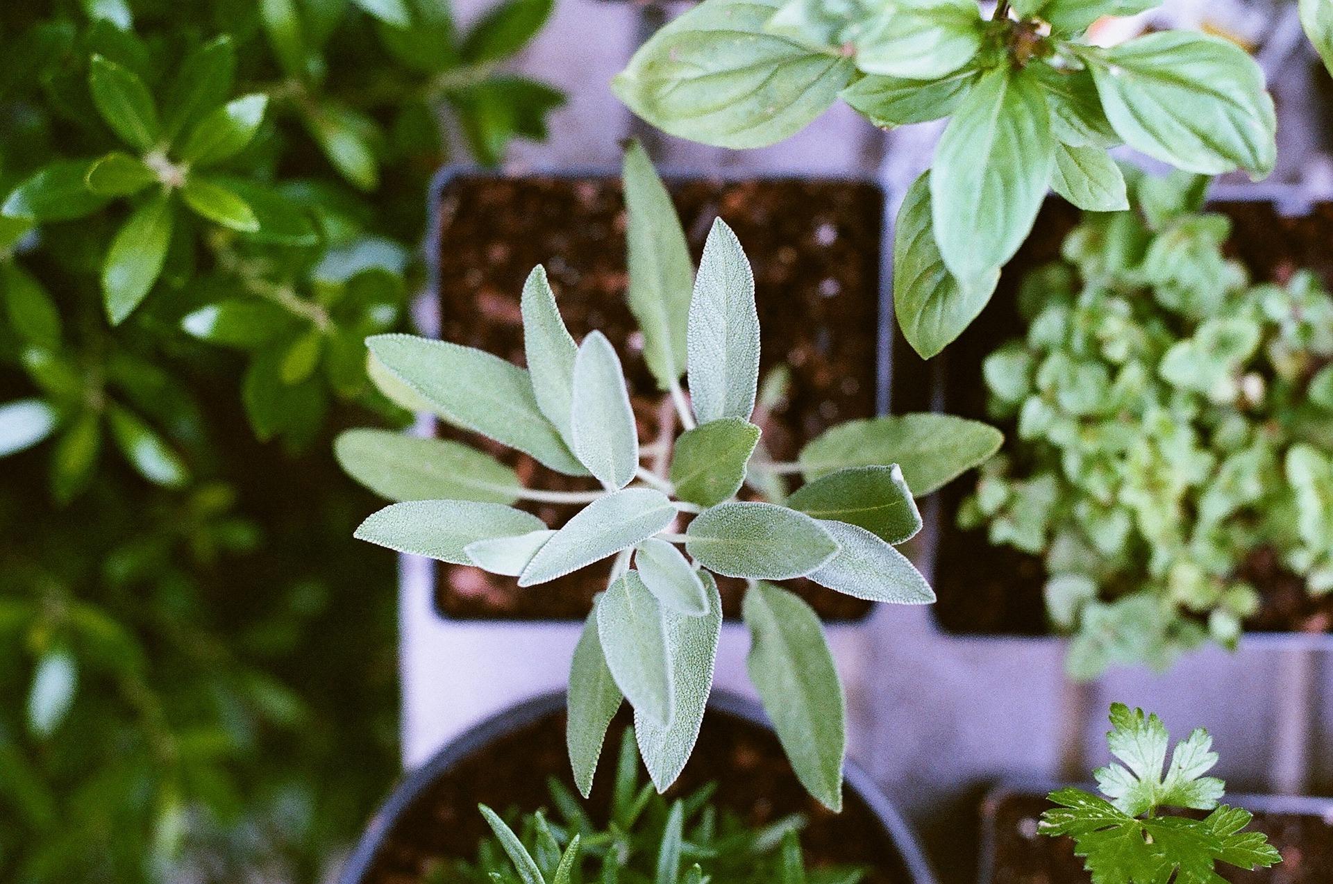 Gartengestaltung auf mediterrane Art – 3 Tipps für ein besonderes Ambiente